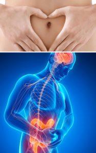 lien intestin cerveau